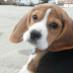 ManonGP1 profile image