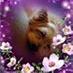 Eliane Vallin profile image