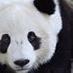 Panda Dos profile image